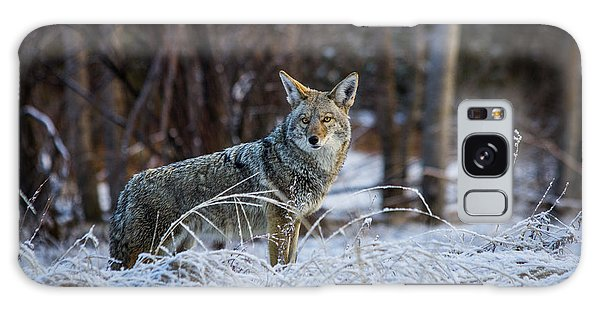 Coyote In The Meadow  Galaxy Case
