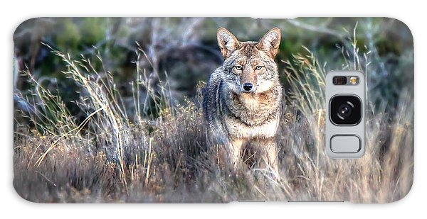 Coyote Stare Down Galaxy Case