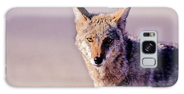 Coyote Stares Galaxy Case