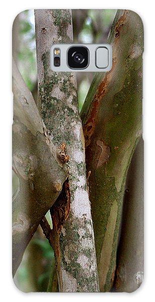 Crape Myrtle Branches Galaxy Case by Peter Piatt