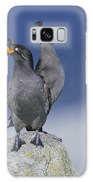 Crested Auklet Pair Galaxy Case