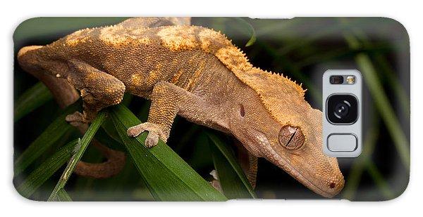 Crested Gecko Rhacodactylus Ciliatus Galaxy Case