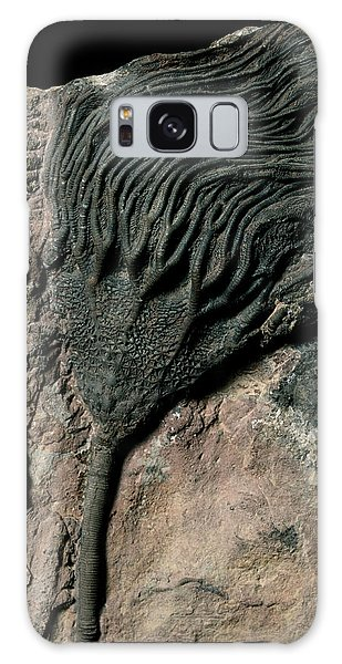 Sea Lily Galaxy Case - Crinoid Fossil by Martin Land/science Photo Library