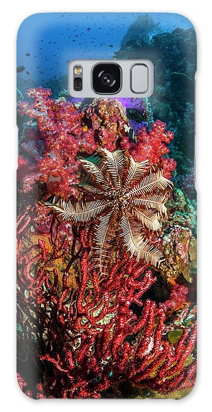 Feather Stars Galaxy Case - Crinoid On A Gorgonian by Georgette Douwma/science Photo Library
