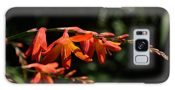 Crocosmia 'dusky Maiden' Flowers Galaxy Case