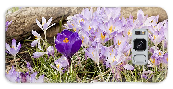 Crocus Garden In Spring Galaxy Case