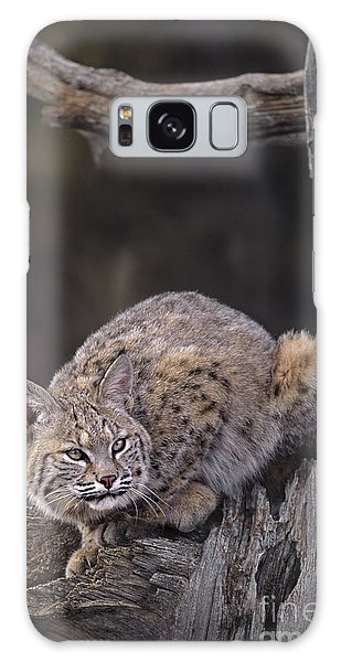 Crouching Bobcat Montana Wildlife Galaxy Case