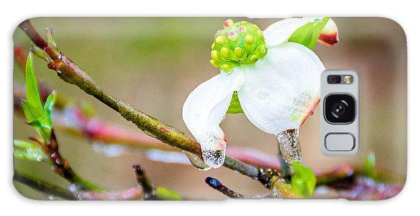 Cruel Winter For A Dogwood Flower Galaxy Case