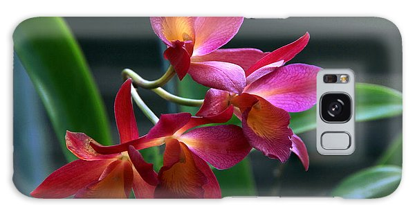 Ctna New River Orchid Galaxy Case by Greg Allore