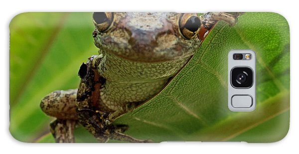 Cuban Tree Frog Galaxy Case