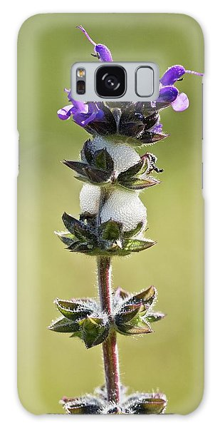Cuckoo Galaxy Case - Cuckoo-spit On Clary (salvia Verbenaca) by Bob Gibbons