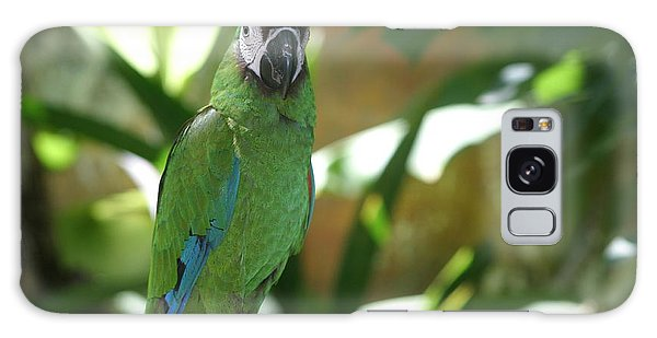 Curacao Parrot Galaxy Case by Living Color Photography Lorraine Lynch