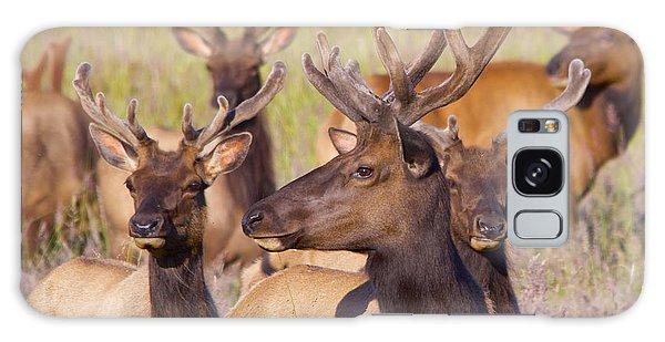 Curious Bull Elk Galaxy Case by Todd Kreuter