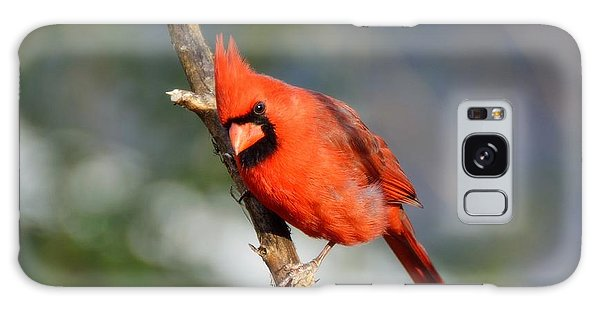 Curious Cardinal Galaxy Case by Lisa L Silva
