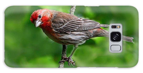 Curious Purple Finch Galaxy Case