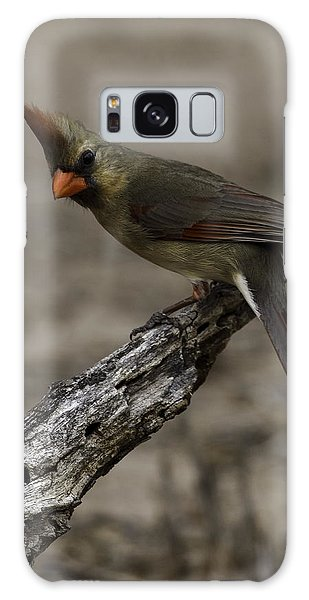 Galaxy Case featuring the photograph Curious Pyrrhuloxia by Donald Brown
