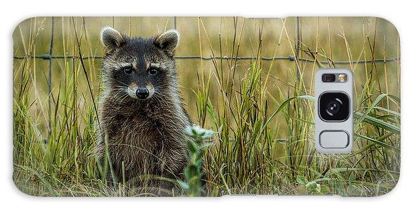 Curious Raccoon Galaxy Case