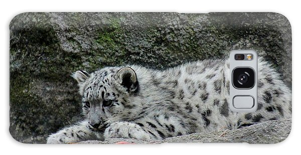 Curious Snow Leopard Cub Galaxy Case