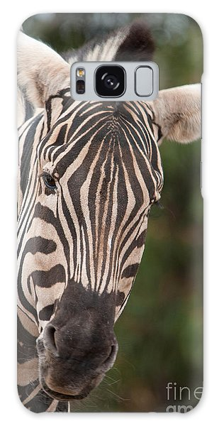 Curious Zebra Galaxy Case