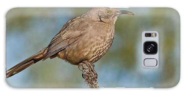 Curve-billed Thrasher Galaxy Case