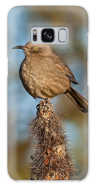 Curve-billed Thrasher On A Cactus Galaxy Case by Jeff Goulden
