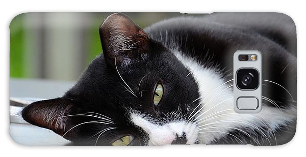 Cute Black And White Tuxedo Cat With Nipped Ear Rests  Galaxy Case