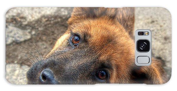 Cute Dog Closeup Galaxy Case