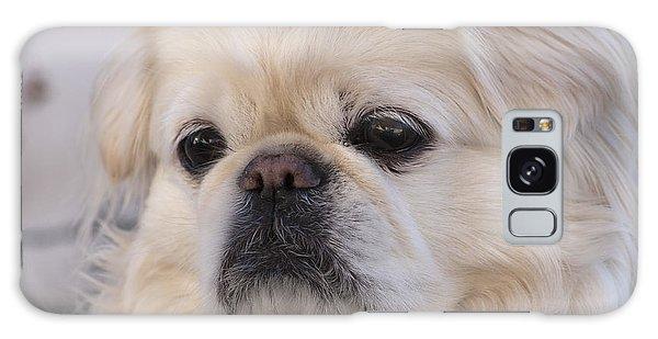 Cute Dog Galaxy Case
