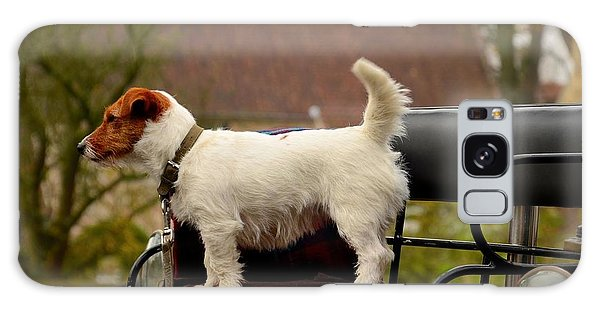 Cute Dog On Carriage Seat Bruges Belgium Galaxy Case
