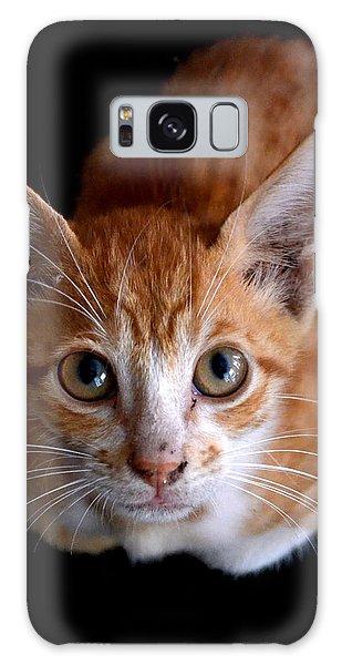 Cute Kitten Galaxy Case