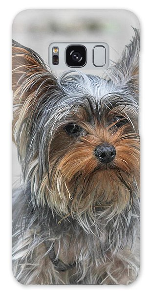 Cute Yorky Portrait Galaxy Case