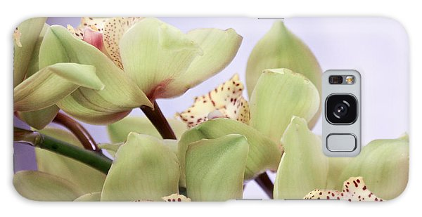 Cymbidium Orchids  Galaxy Case