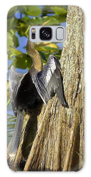Cypress Bird Galaxy Case by Laurie Perry