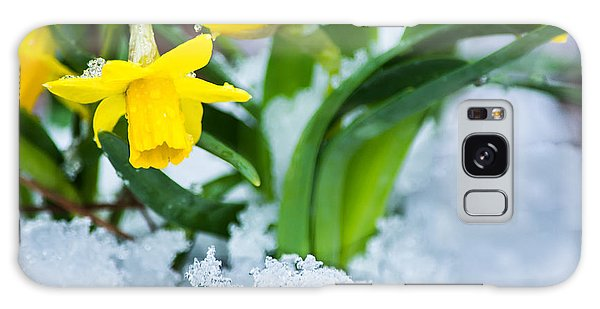Daffodils In The Snow  Galaxy Case