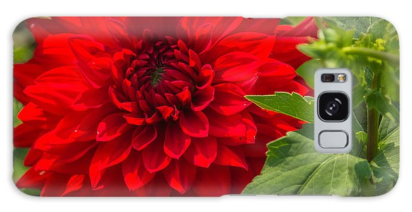 Dahlia Perfection Galaxy Case by Jane Luxton