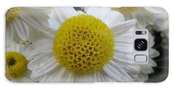 Daisy Like Flowers 1 Galaxy Case