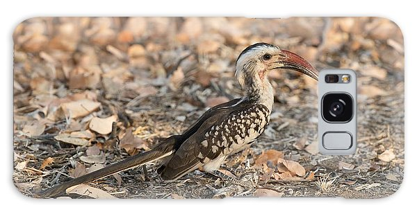 Damara Red-billed Hornbill Foraging Galaxy Case
