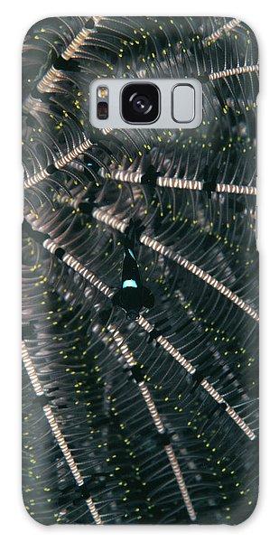 Hiding Galaxy Case - Damselfish In Crinoid by Matthew Oldfield/science Photo Library