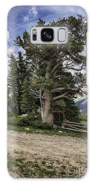 Dancing Trees  Galaxy Case