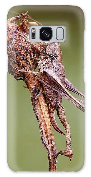 Dark Bush Cricket Galaxy Case