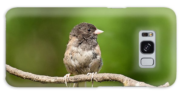 Dark Eyed Junco Galaxy Case