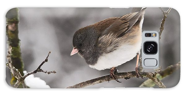 Dark-eyed Junco Galaxy Case