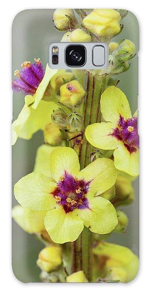No-one Galaxy Case - Dark Mullein (verbascum Nigrum) Flowers by Bob Gibbons