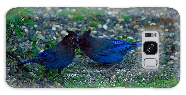 Darling I Have To Tell You A Secret-sweet Stellar Jay Couple Galaxy Case
