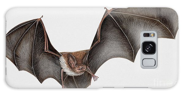 Daubentons Bat Myotis Daubentonii - Murin De Daubenton-murcielago Ribereno-vespertilio Di Daubenton Galaxy Case