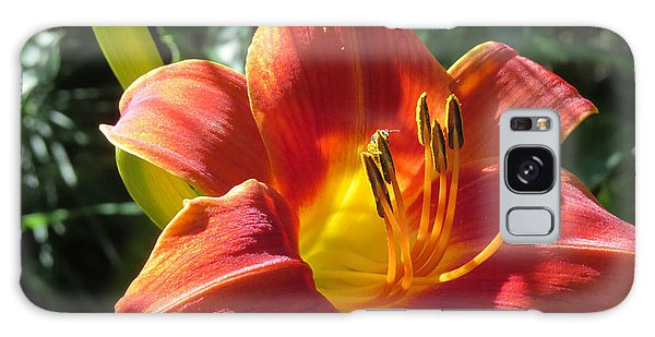Day Lily 1 Galaxy Case