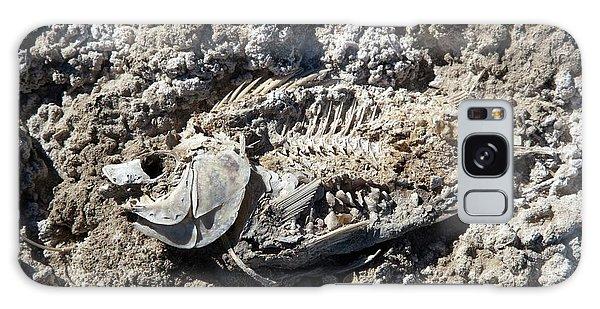 Dead Fish On Salt Flat Galaxy Case