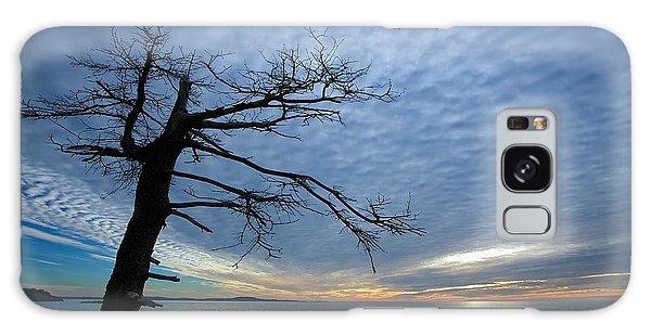Otter Rock Galaxy Case - Dead Tree At Otter Cliffs by Stuart Litoff
