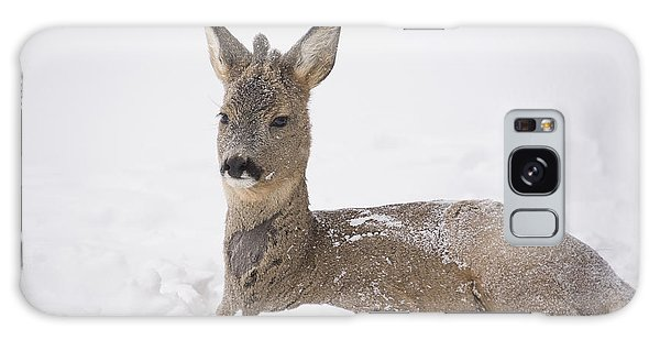 Deer Resting In Snow Galaxy Case