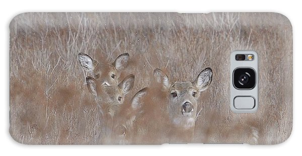 Deer Soft Galaxy Case